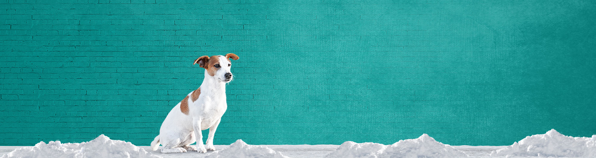 Dog sitting down on snow in front of a wall