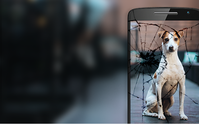 Dog on a phone screen A wet phone Phone with a cracked screen