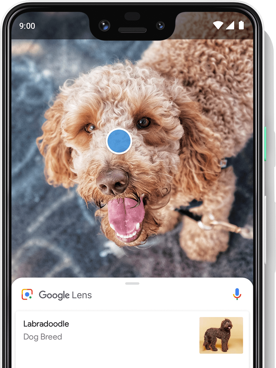 Translate text and identify items in real time with Google Lens.